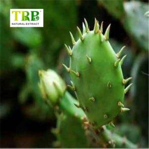HOODIA Cactus Extract /Cholla Stem Extract