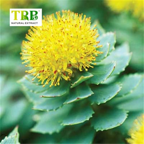 Rhodiola Rosea Extract Featured Image