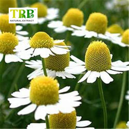 Chamomile Extract Featured Image