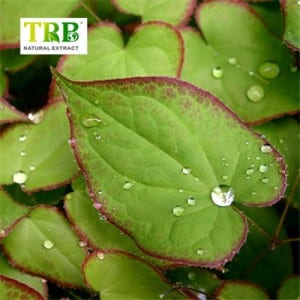 Epimedium Extract 10% 98% Icariin