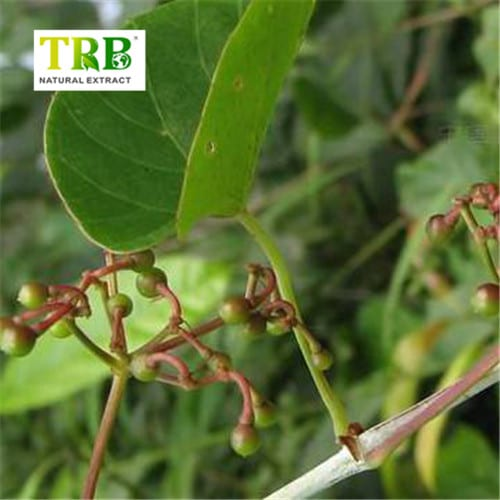 Competitive Price for Linoleic Acid Conjugated - Cissus Quadrangularis Extract – Tong Rui Bio detail pictures