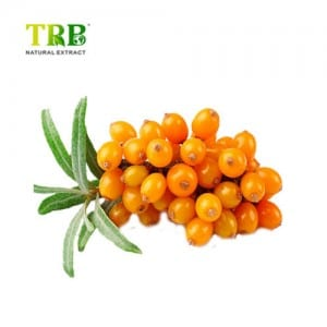 Sea Buckthorn Extract