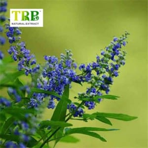 Super Purchasing for Standard Agnus Castus Chaste Tree Extract