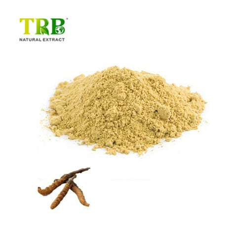 Cordyceps Extract Featured Image