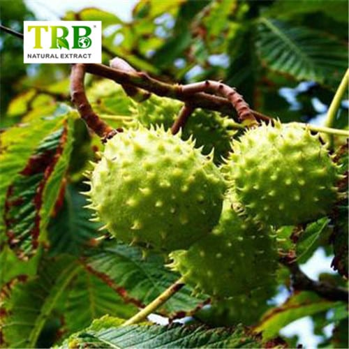 Horse Chestnut Extract Featured Image