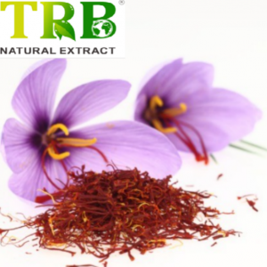 Saffron Crocus Extract/Crocus Sativus Extract