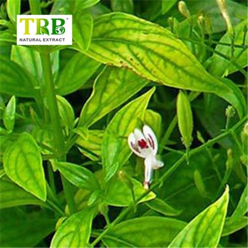Andrographis Paniculata Extract Featured Image
