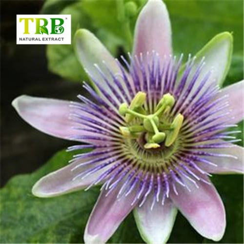 Passion Flower Extract Featured Image
