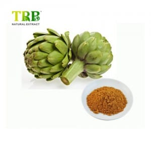 China OEM Artichoke Extract Powder Cynarin,Chlorogenic Acid