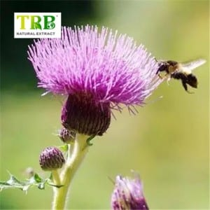 Cheapest Factory Silymarin Milk Thistle Silymarin 80% Silybin 50% 55% Cas 84604-20-6 Milk Thistle Extract