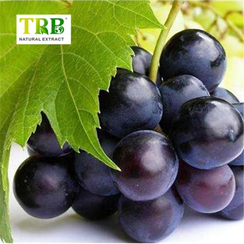 Reliable Supplier Astragalus Extract Ta-65 - Best Price on Natural Opc 95% Grape Seed Extract Powder – Tong Rui Bio