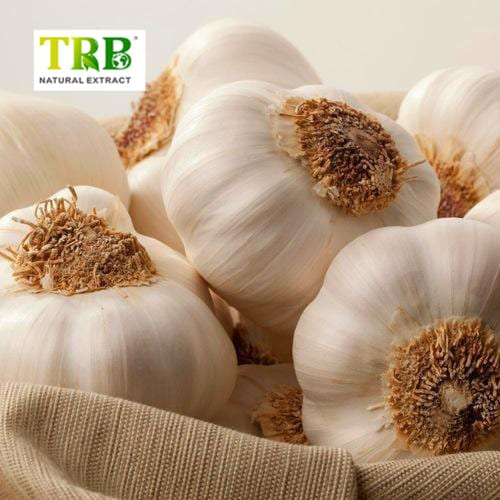 Garlic Extract Featured Image