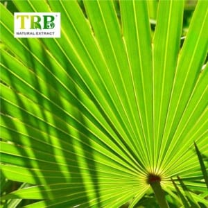Discountable price Natural Saw Palmetto Extract 45% Fatty Acid