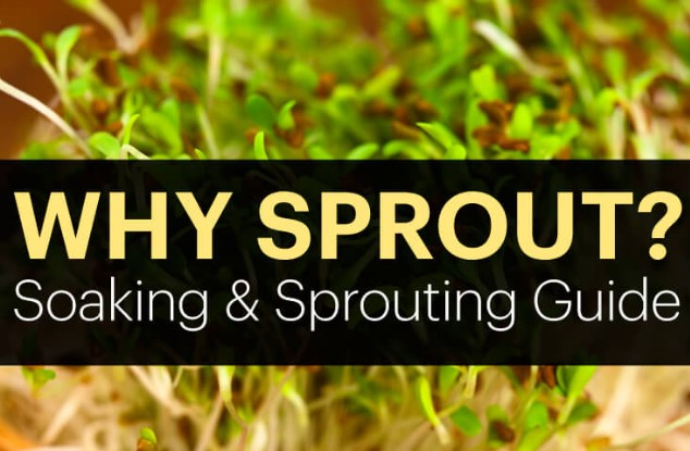 TOP-RATED Item now : Sprouting Kit !!!