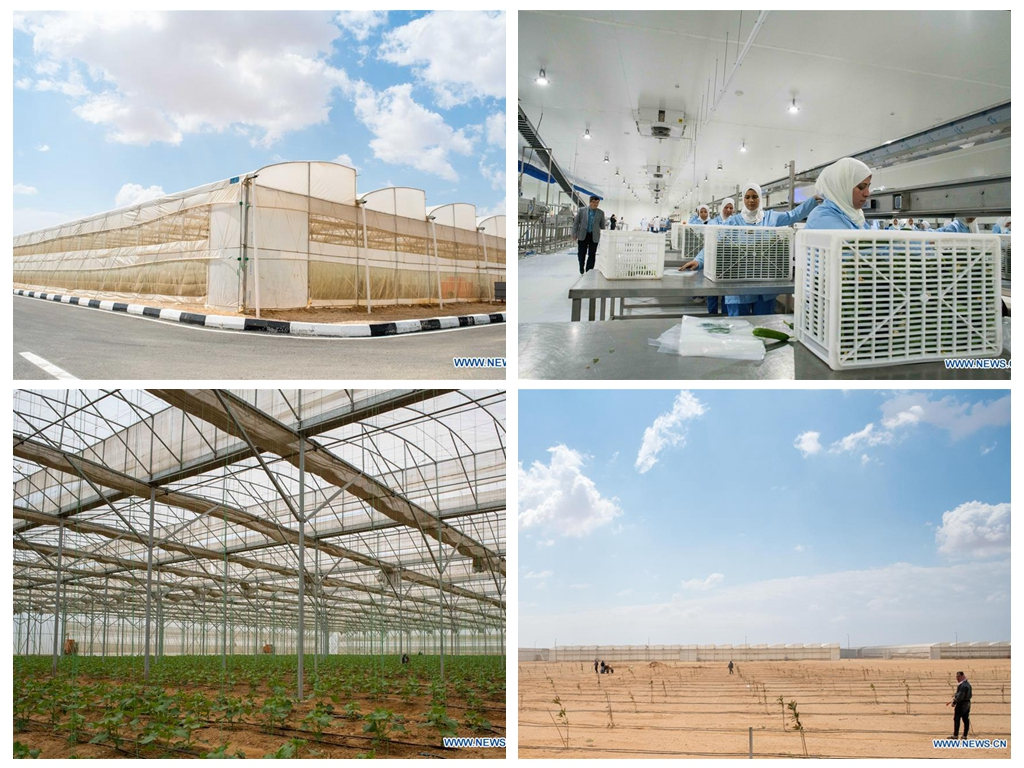 Interview: China's greenhouse technologies turn Egypt's desert green