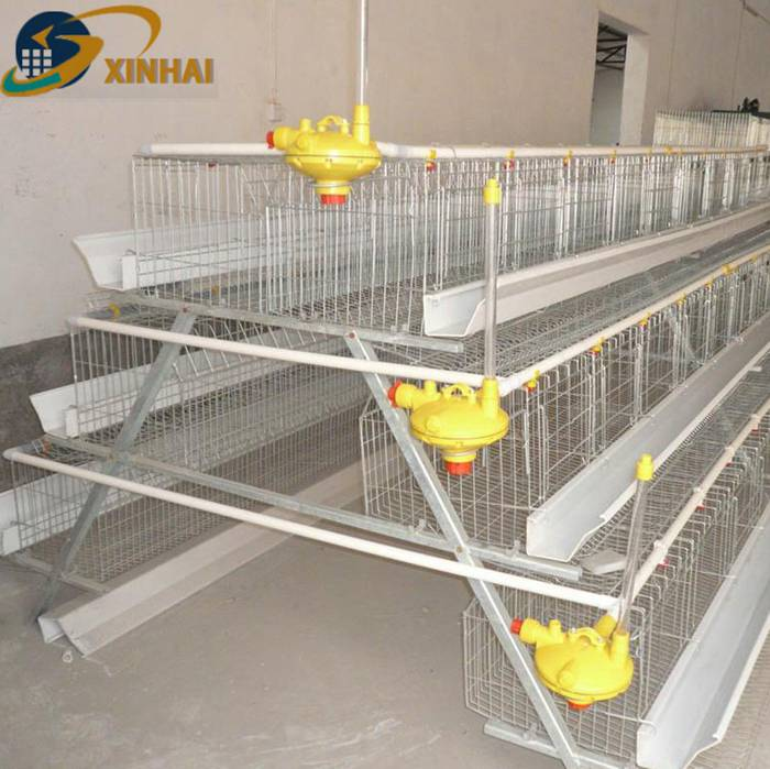 XINHAI factory direct selling poultry cages for Kenya chicken farm Featured Image